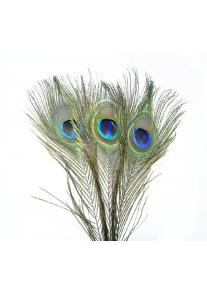 50 x Natural Peacock Eyes Feathers 10-12 inches (25-30 cm)