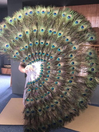 """Double sides Peacock Eyes Feathers fan  Burlesque Dancing Fans 28"""" x 49"""""""